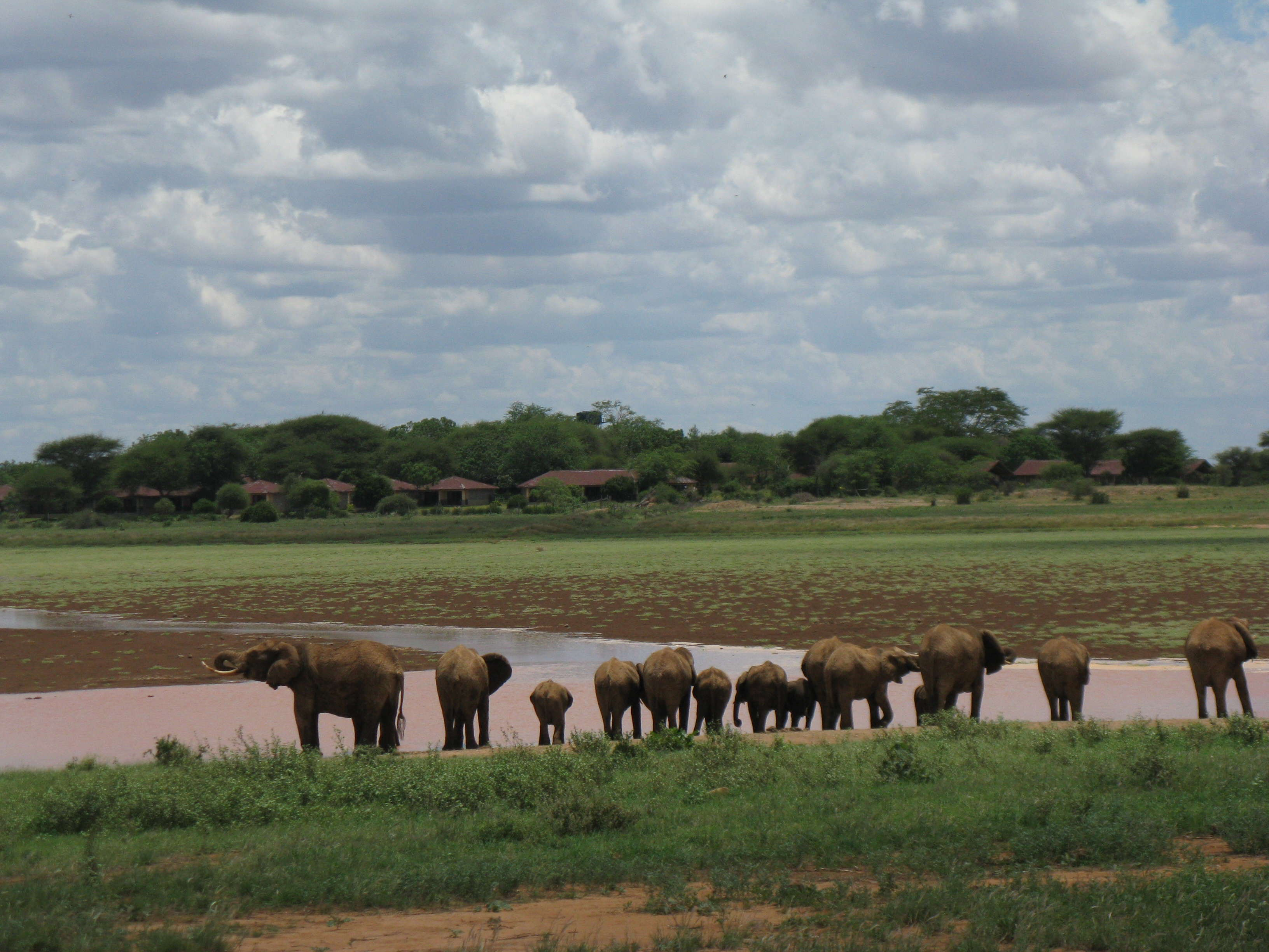 elephants on world cruise overland tour