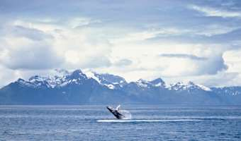 See Alaska through Holland America's Eyes!