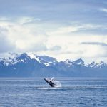 See Alaska through the Eyes of Holland America!