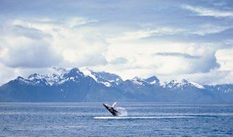 See Alaska through Holland America's Eyes!