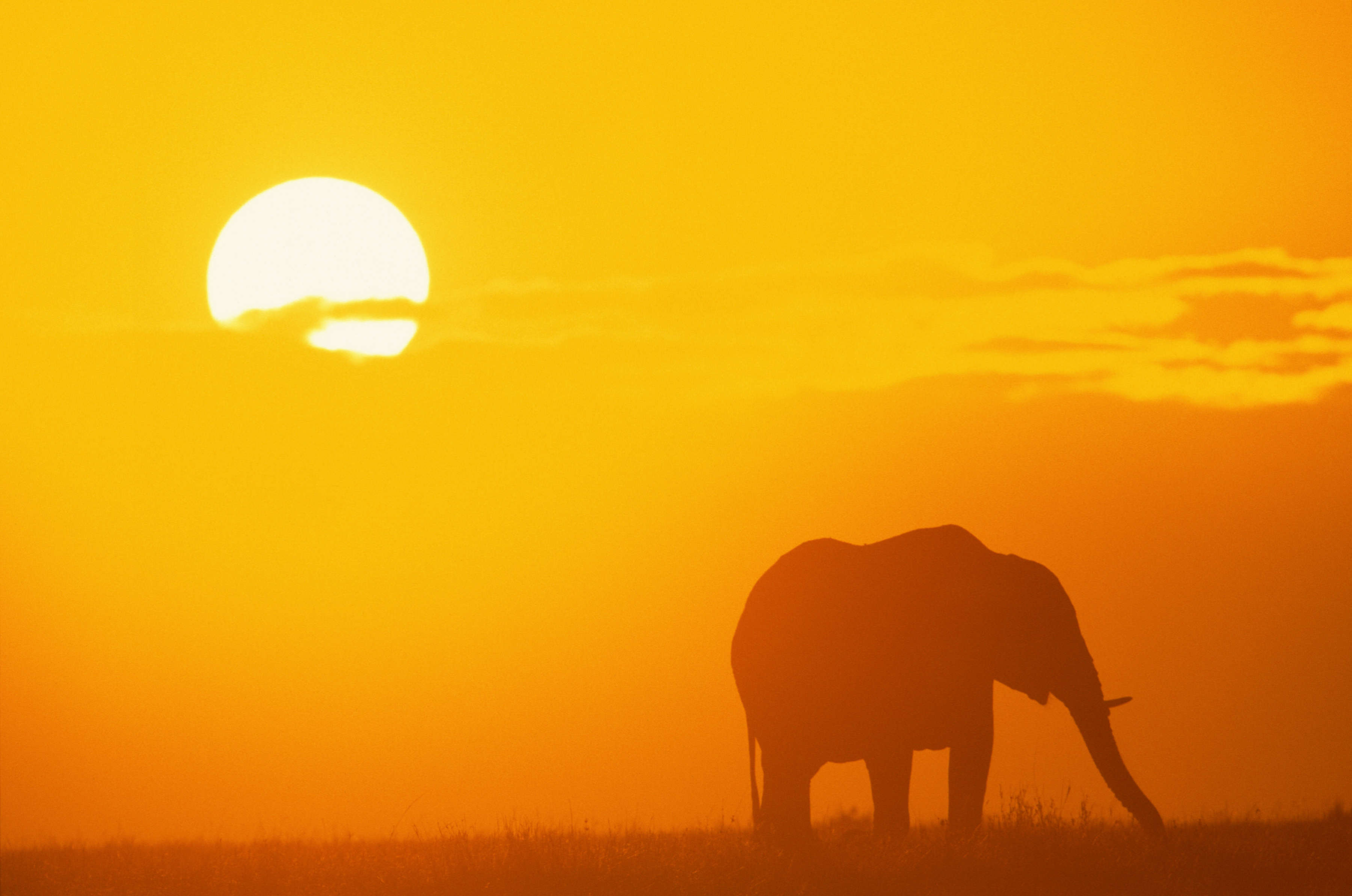 Cruise to Africa
