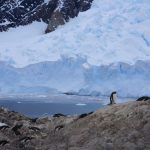 Expedition Antarctica: Ultimate Adventure Cruise