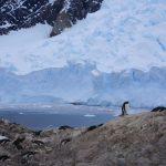 Expedition Antarctica: Ultimate Adventure Cruise