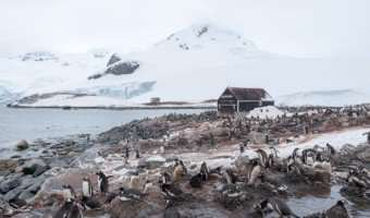 Penguin Video: Hear Their Voices, Watch Them Waddle, As Seabourn Quest Takes Us Deeper Into Antarctica