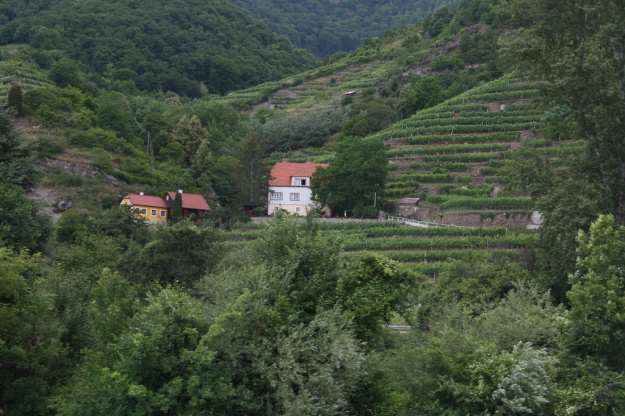 Wachau Valley Vineyards