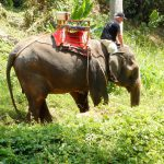 2016 Grand World Voyage Special Tours in Thailand