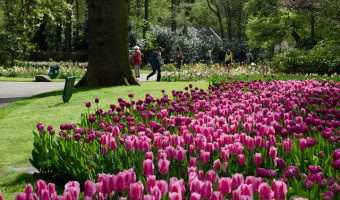 Who Should Book A Tulip Time River Cruise & When To Go?