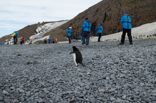 Why visit antarctica let us show you for Can anyone visit antarctica
