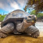 Galápagos Islands Expeditions: Comparing Sailings