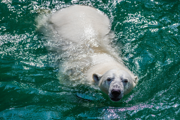 Polar Bears or Penguins? Pick Your Wonderland Cruise