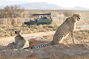Safaris & Game Drives