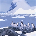 Luxury Cruise - Seabourn Cruise Line, sailing to Antarctica | South America  for 21-day Ultimate Antarctica & Patagonia