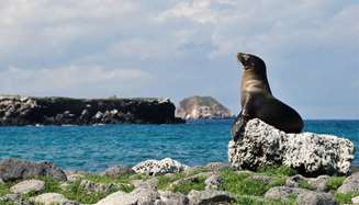 Join Celebrity Cruises to the Galápagos Islands for a thrilling, in depth look at the abundant wildlife only found here. Take advantage of onboard naturalists that give expert lectures. Options abound for guided tours, snorkeling and more.