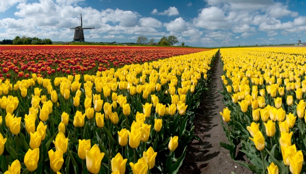 Spend next Spring discoverning the Tulips and Windmills of The Netherlands!  10-day Europe River Cruises March - May, 2015 now offer 2-for-1 fares if booked by Aug. 31, 2014.