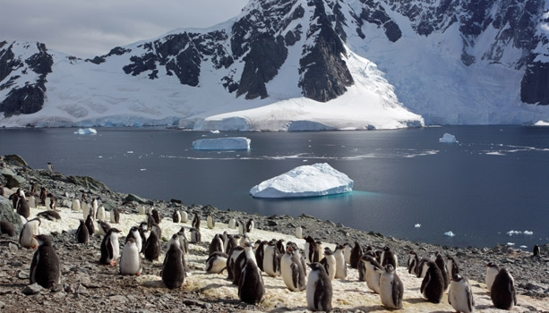 Antarctica & Patagonia Experience: 21 days adventures with experienced host, private cocktail party & a free shore event!